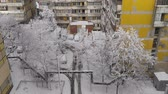 condições : Winter in the city. Snow-covered trees Stock Footage