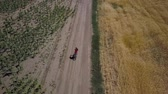Aerial View of girl rides along the road between agricultural fields. 4K
