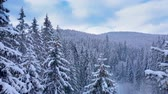 noel ağacı : Aerial flight in the winter forest. Winter landscape and snow covered trees. Snowy tree branch in a view of the winter forest. Aerial footage, 4K Stok Video