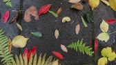 slecht weer : Drops of rain fallon colorful autumn leaves. Weather concept