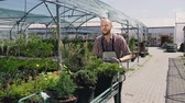 virágárus : A man with a beard goes through a greenhouse, and carries on the Garden trolley seedlings of beautiful decorative trees. Stock mozgókép