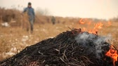 land pollution : Farmer burning stack of dry reed