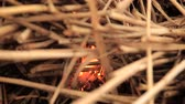 desastre : Stack of dry grass on fire