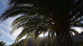 arabia : Palm trees against moutain landscape Stock Footage