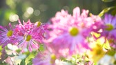 landscaping : Beautiful garden flowers Stock Footage