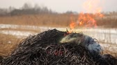 alight : Stack of dry grass on fire