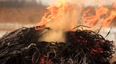 saman : Stack of dry grass on fire