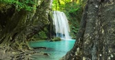 forest : Amazing nature video background. Beautiful waterfall in tropical rainforest with old trees and clear water of natural pond. Tracking slider shot