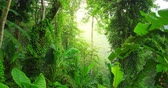 background : Evergreen tropical rainforest scenic landscape background