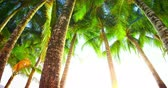 calm : Palm trees by the shore of tropical island at sunny day slider video shot