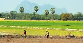 área de trabalho : Burmese people from local village working on farmland field. Agriculture in Myanmar still depends on manual labor
