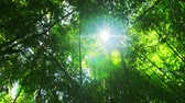 movimentar se : Lens flare effect and camera rotation in green tropical rain forest. Peaceful nature background Vídeos