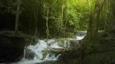 travel : Jungle rainforest background with green plants vegetation and river cascades Wideo