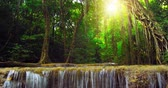 forest : Beautiful nature background of exotic plants in tropical rainforest in Thailand Stock Footage
