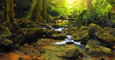 background : Wilderness of deep forest with creek and sunlight shine through leaves and trees