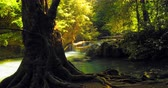 background : River stream in deep forest with sunlight through canopy leaves tranquil nature