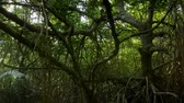 mroczne : Beautiful mangrove forest reserve. Conservation and protection of natural biological divirsity in national parks of Sri Lanka. Wild nature background