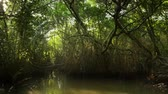 glow : Ecosystem of mangrove forest. Protected wildlife in tropical climate ecosystem with trees, twisted roots, aquatic animals and bright sun light flickering through foliage and park canopy