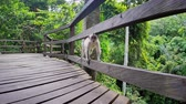 fascicularis : Young funny asian monkey running in green tropical nature park in Bali, Ubud, Indonesia