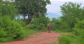 park : Sri Lanka wildlife nature landscape. Elephant in Yala park Stock Footage