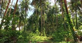 arka plân : Coconut palm tree forest in Thailand