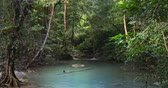 dinginlik : Jungle forest natural paradise background. Rainforest landscape with water stream and dense tropical vegetation