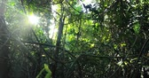liána : Sun rays and sunshine through branches of jungle forest canopy. Scenic tropical nature background of dense rainforest