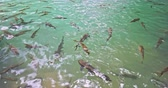 group of animal : Many fish swim in clean water