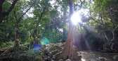 baldachýn : Light rays and beams of shining sun in jungle forest at morning
