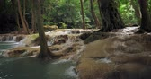 平和 : River stream flows in forest. Jungle vegetation and nature background