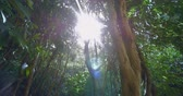 zkroucený : Tropical rainforest lush. Sun beams and rays shine through tree tops