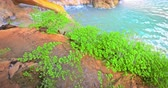 vegetace : Vibrant green plants grow near water in tropics of Thailand