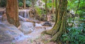 Форрест : Humid climate of tropical rainforest in Asia. Water stream flows through jungle forest Стоковые видеозаписи