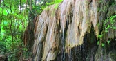 湿気の多い : Humid climate of rainforest. Water drops and torrents on wet rock formations