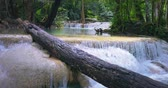 çağlayan : Fallen tree trunk on water stream in tropical forest of Thailand