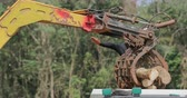 bornéu : Heavy machinery unloads tree logs into truck on forest logging site in South East Asia region Vídeos