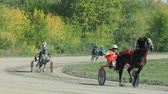horse gait : Russia Novosibirsk 2016. Many horses with carts. Jockey in wagon. Harness racing. Horse show. Equestrians running horses on hippodrome. Horse racing with sledge. Horse Racing. Racecourse.