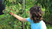 Teen girl in garden eats raspberries, picking them from bush Стоковые видеозаписи