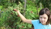 Teen girl in garden regales on raspberries, picking them from bush Стоковые видеозаписи