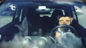 motorista : Daytime Front shot of a Pitbull sitting on the Driver's Seat of Car