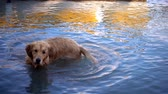 tomada : the dog in the sea Stock Footage