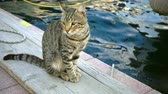 Sweet Cat Animal near the Sea