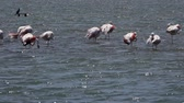 colores pasteles : Flamingo Birds en agua de mar Archivo de Video