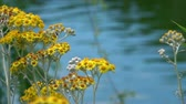 flor de loto : Yellow Flowers and Lake Water in Nature Archivo de Video