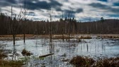 pântano : Swamp in cloudy day, timelapse 4k Stock Footage