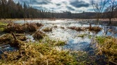 pântano : Swamps flooded with water after the winter, timelapse 4k