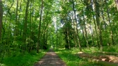 springtime : Walking in the middle of green forest in Poland, Europe