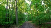 animais selvagens : Sunny green forest in summer, Poland, Europe