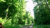 tronco : Driving on country road in green forest, Poland, Europe
