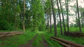 tronco : Walking in green forest in sunny day in Poland, Europe Vídeos